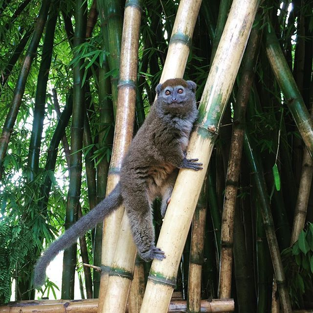Discover #Madagascar! #jungle #nature Photo credits: @glsmarine_
