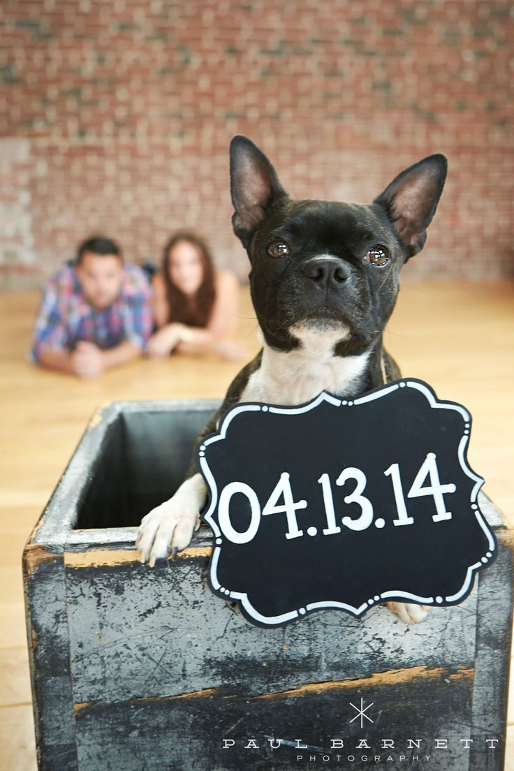 37 best save the date signs for dogs images on pinterest   dog