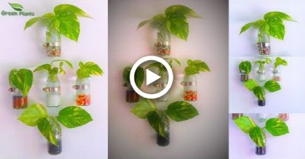 How to Grow Money plant | Clear Glass Wall Mounted Planter | Money plant Growing Ideas//GR – Fashion DIY!!!
