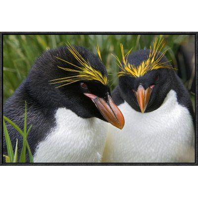 """East Urban Home 'Macaroni Penguin Pair' Framed Photographic Print on Canvas Size: 16"""" H x 24"""" W x 1.5"""" D"""