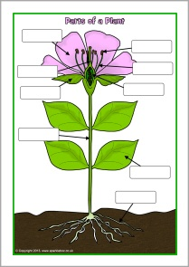 stempelkaarten planten