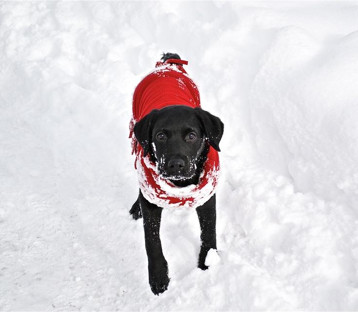 correre nella neve...