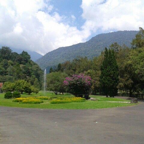 Cibodas Garden