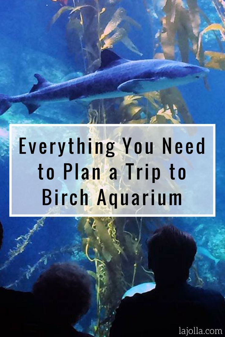 Make your visit to the Birch Aquarium stress-free! Check out our guide.