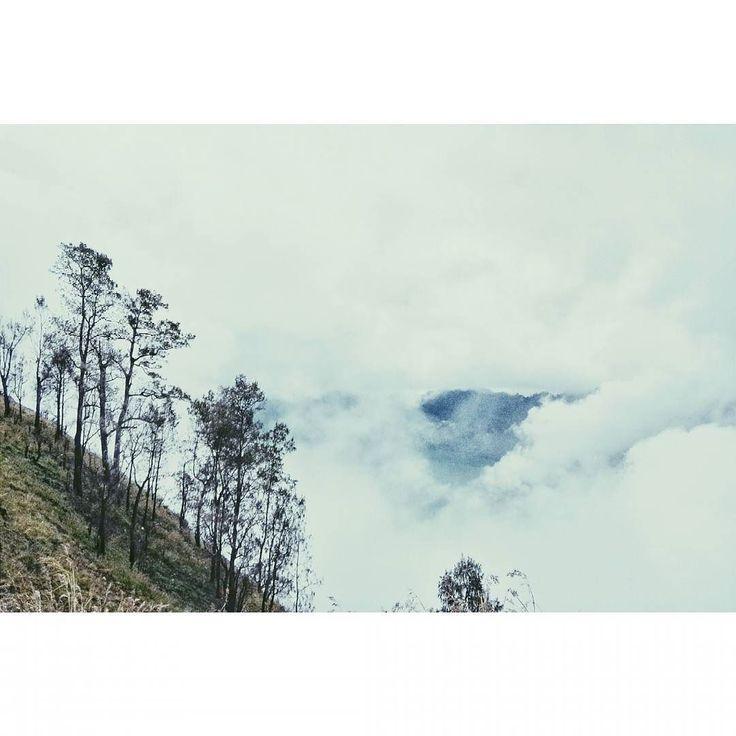. e f t e r m i d d a g awas jangan sampe rindu repot urusannya  #vscocam #vsco #nature #eyeem by novianunuu