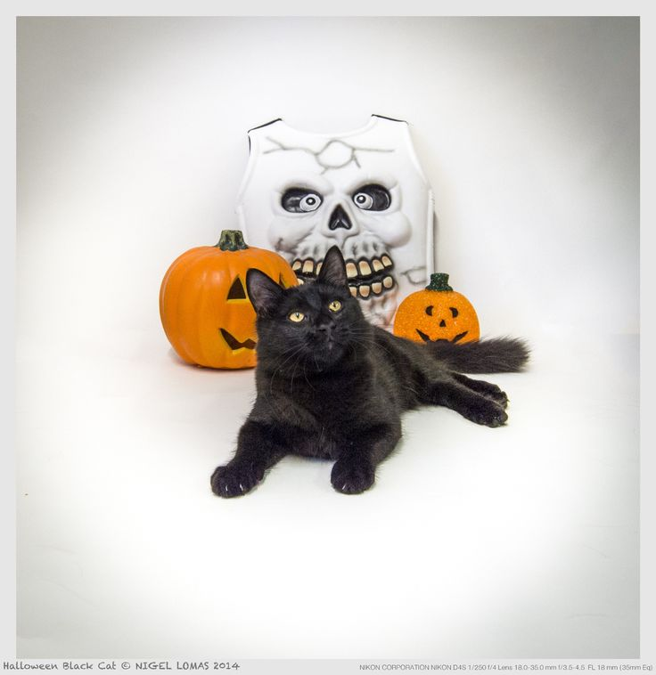 Halloween Black Cat by Nigel Lomas on 500px