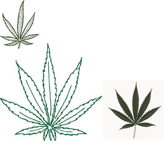 Pot Leaf Tattoo Stencil 177 best images about ...