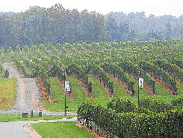 Childress Vineyards in Lexington, NC