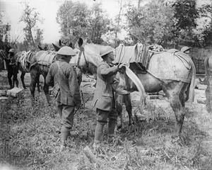 WWI, 7 June 1917, Battle of Messines; Gunners of the Royal Field Artillery unloading shells from a pack horse. ©IWM  (Q 5467)