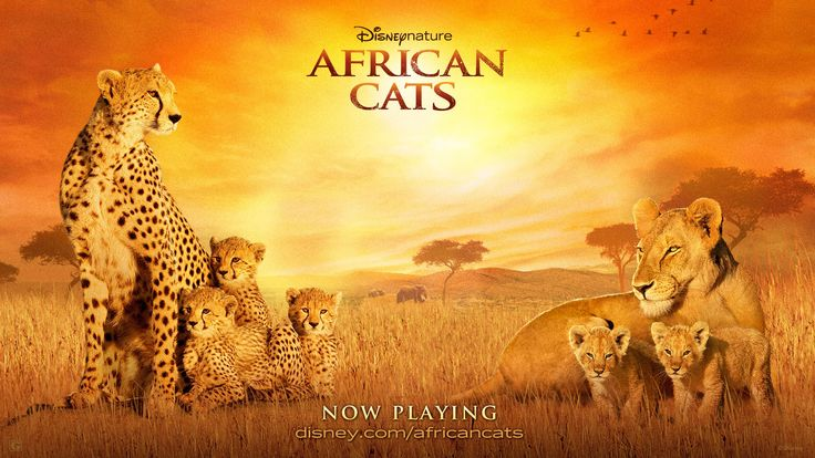 Watch Streaming HD African Cats, starring Samuel L. Jackson, Patrick Stewart. A nature documentary centered on two cat families and how they teach their cubs the ways of the wild. #Documentary #Adventure http://play.theatrr.com/play.php?movie=1223236