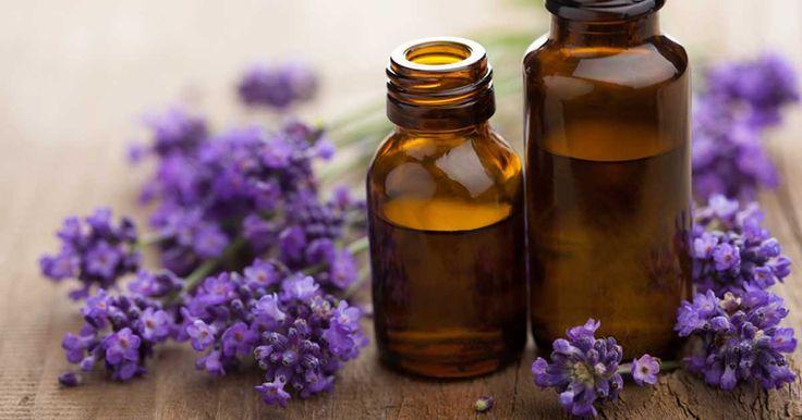 Návod na přípravu levandulového oleje