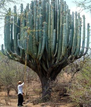 Cactus in Oaxaca, Mexico by Eva