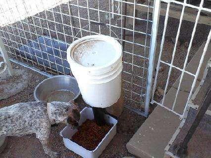 Automatic Dog Feeder Honey Do Dog Feeder Automatic