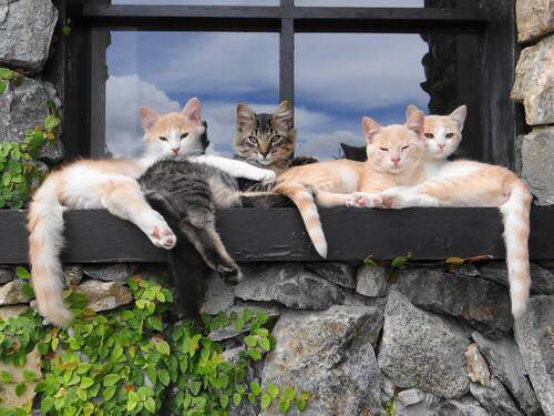 69 Best Cat Window Images On Pinterest Cats Funny