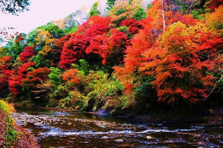 10 Spots for Viewing Autumn Leaves in The Tokyo Area | tsunagu Japan