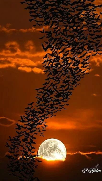 A flock of birds or are they bats? flying in the light of the moon!