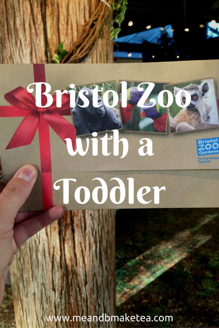 Our Day Out at Bristol Zoo!Last time we went to Bristol Zoo, the little man was two and he was in an awful grump. This time we had a fab time!     Bristol Zoo is up in Clifton, not far from the suspension Bridge. It makes for a great day out with little ones and it isnt huge. Which means it's good for toddlers and pushchairs.  #travel #bristol #uk #zoo