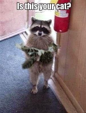 お宅のネコちゃんですか?