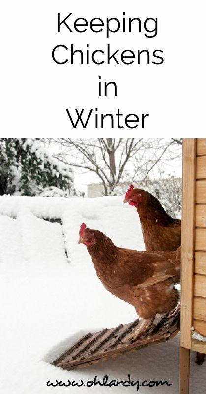 The Definitive Guide to Keeping Chickens in Winter - www.ohlardy.com: