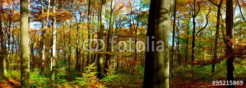 "Download the royalty-free photo ""Colorful autumn forest on a sunny day"" created by John Smith at the lowest price on Fotolia.com. Browse our cheap image bank online to find the perfect stock photo for your marketing projects!"