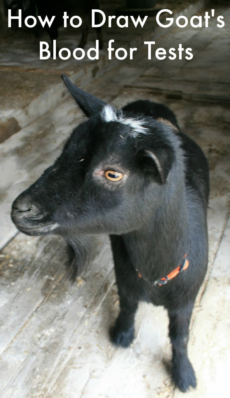 294 best Goats!!!! images on Pinterest | Sheep, Baby goats and Farm ...