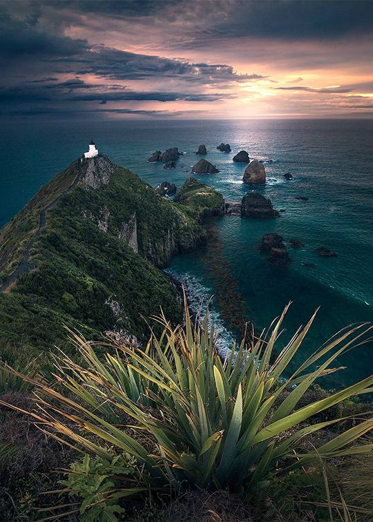 Pin by Stacey Michelin on New Zealand New zealand