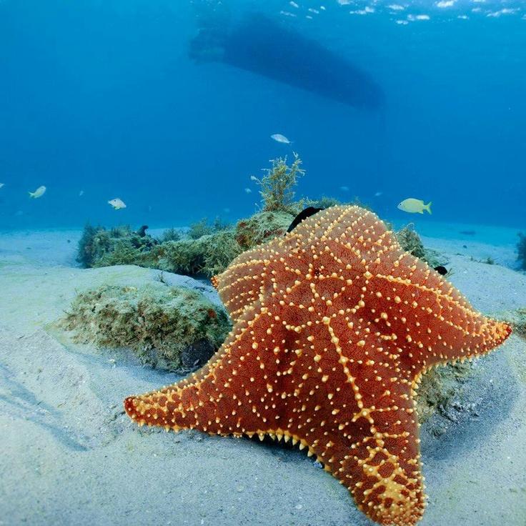 Картинки про морские звезды