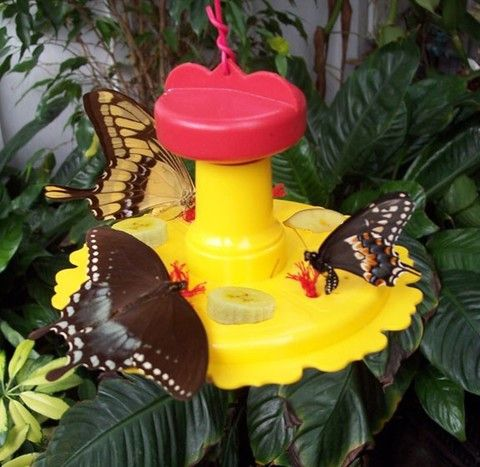 Butterfly feeder designed and tested by biologists. It has nectar ports as well as spaces for fruit bits that they love. 6 ounce capacity, easy to assemble, fill and clean. Comes with list of flowers