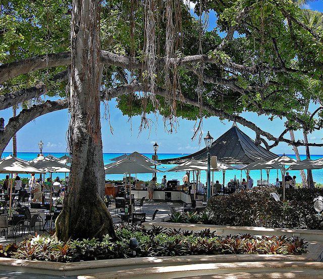 Banyan tree at the Moana Surfrider, Waikiki, Hawaii    Loved these trees; they were incredible....