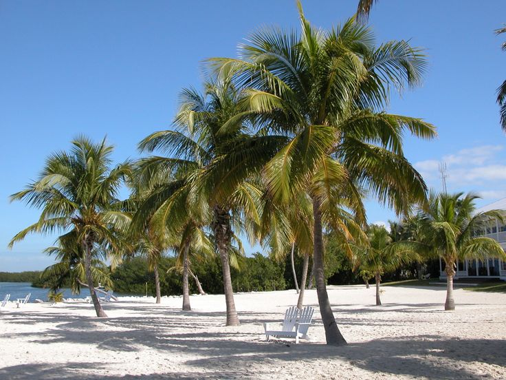 The Beach Boys called Islamorada the real inspiration for their hit 'Kokomo.' Four islands in this upper Florida Keys attraction offer tranquil spots to stretch out on the sand. And don't forget your fishing pole -- locals call this the 'sport fishing capital of the world.'