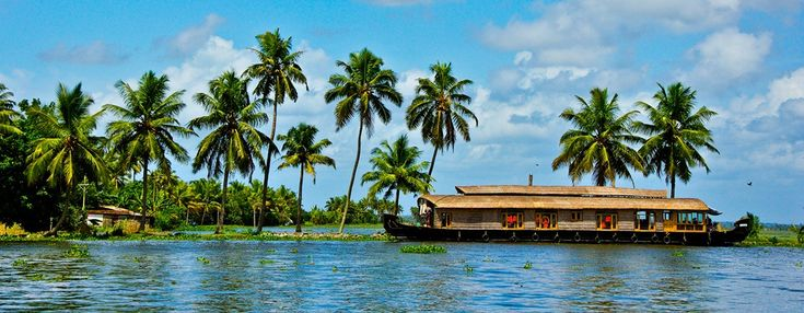 Fun* Facts About Kerala; The second most common thing found here: coconut trees.