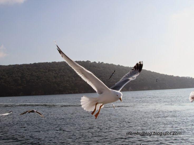 чайка на Мраморном море