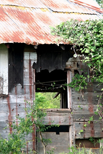 the rusty roof