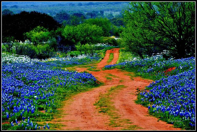 The scenic road Willow Loop, texas. Do this in spring, when the flowers are out&beautiful! Wednesday 14th of march 2012