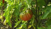 35 pest and disease remedies for the garden