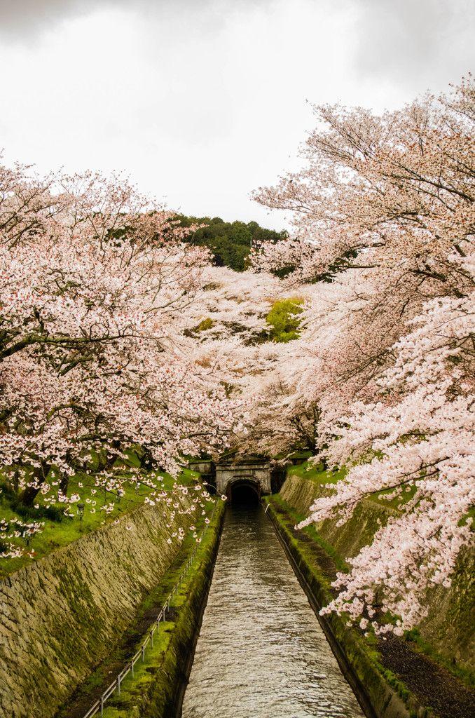 Lake Biwa Canal, Shiga, Japan 琵琶湖疏水