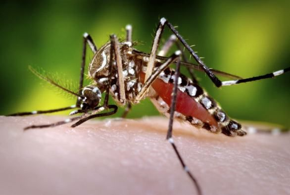 Zika Fever