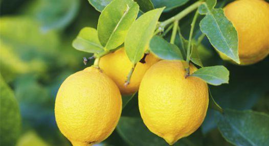 5 způsobů využití citronu pro vaši krásu