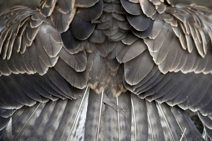 ^^: Inspiration, Nature, Pattern, Color, Texture, Grey, Feathers, Birds