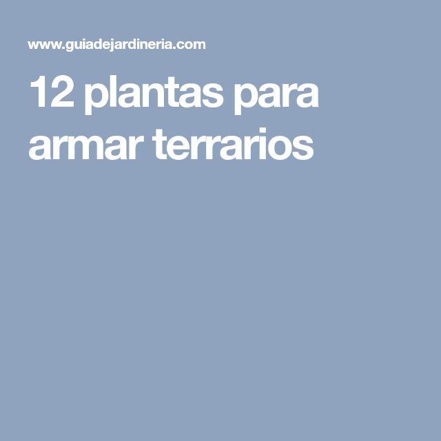12 plantas para armar terrarios