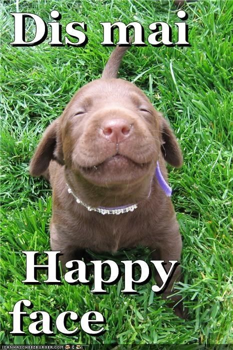 happy face funny dog meme click here to find