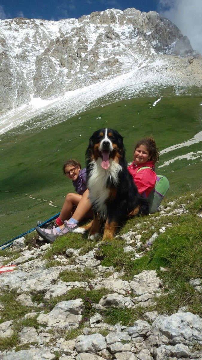Hundefreundliche Ferienwohnung in Castiglione Messer Raimondo. Bio Urlaub zwischen den Bergen der Abruzzen und dem Meer. Bed and Breakfast mit unseren