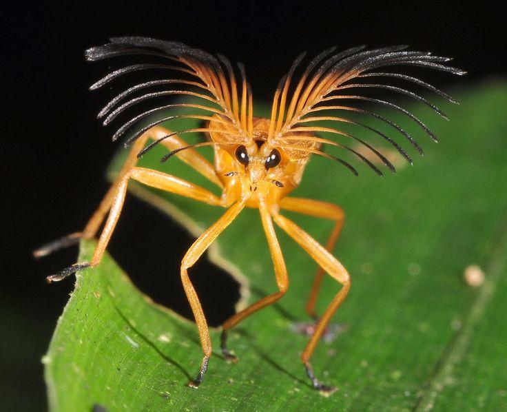 *strange little insect