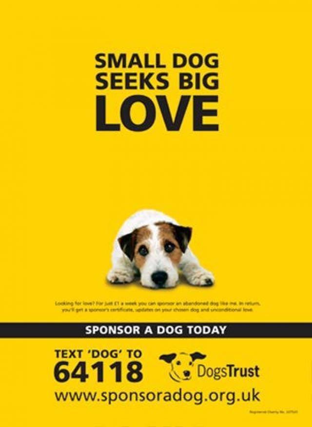 SOFII · Dogs Trust: Patenschaft für einen Hund