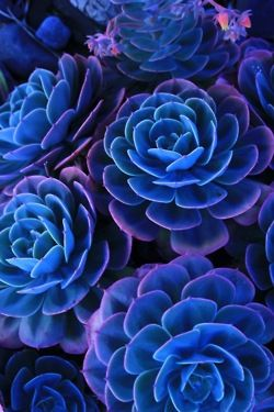 Beautiful Blue And Purple Flowers 3