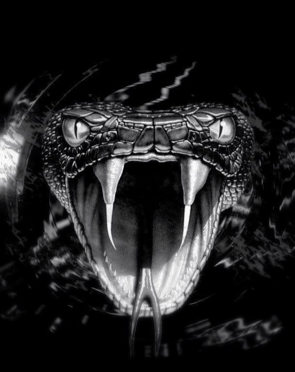 Das ist beängstigend für mich, aber leider nur für das, wonach ich suche … …   – Drachen
