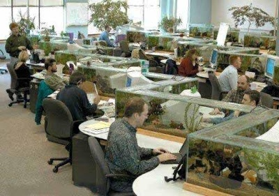 Fish tank cubicles hopefully no one at the office has a for Office fish tank
