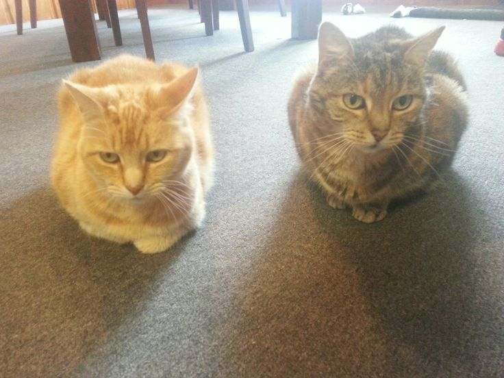 Kitties taken by surprise