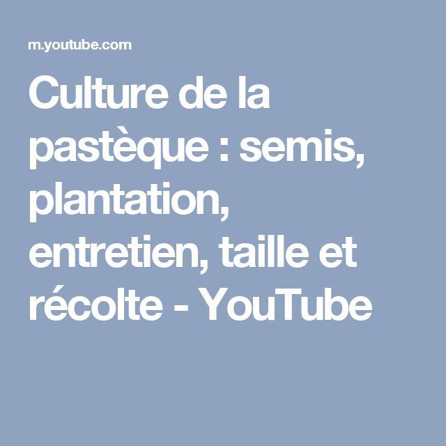Culture de la pastèque : semis, plantation, entretien, taille et récolte - YouTube