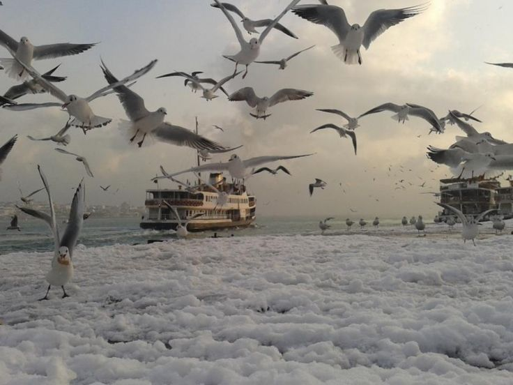 İstanbul Snow and Seagulls